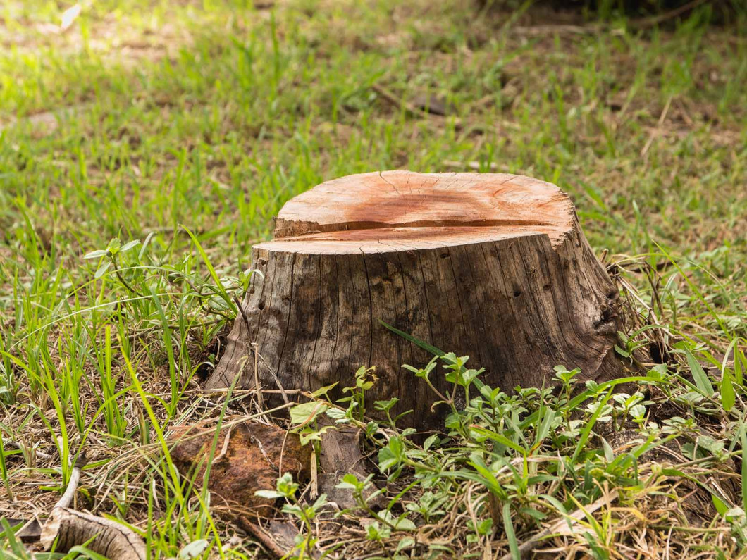 You'll love our stump grinding service
